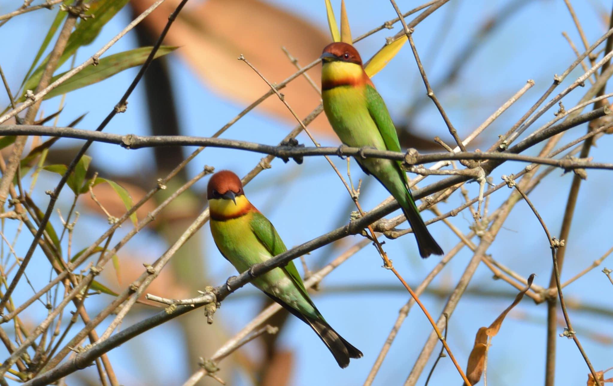 Bird at Cat Tien National Park