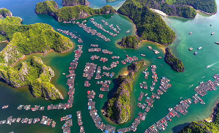 Protect Pristine Beauty of Lan Ha Bay: Hollywood hero DiCaprio