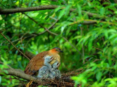 Best of Vietnam Birding and Culture