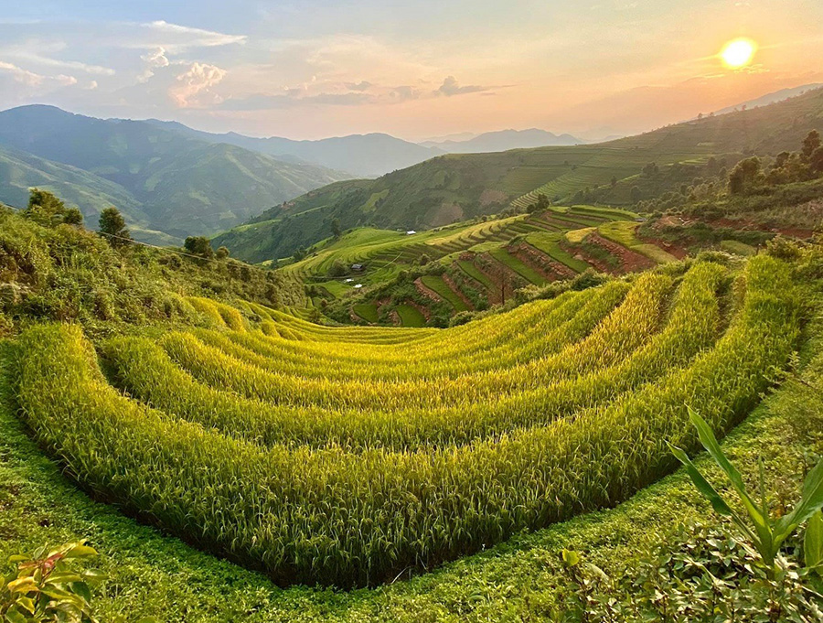 Rice field in Son La