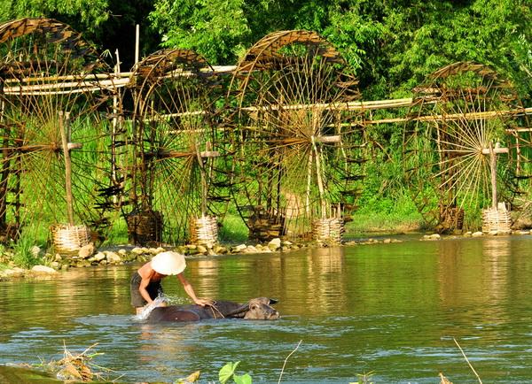 Washingfor Buffalo in Pu Luong