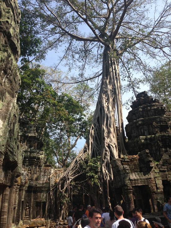 big tree in Ta Prohm